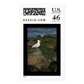 Gulls on the Rocks Postage