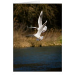 Gulls Over the Thames Notepad Cards