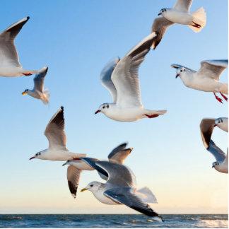 gulls photo cutouts