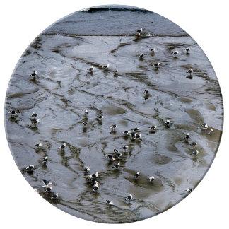 Gulls Plate
