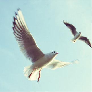 gulls statuette