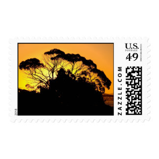 Gum Tree At Sunset, Auckland, New Zealand. The Auc Postage Stamp