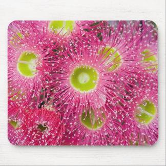 Gum Tree Flower Explosion Mouse Mats