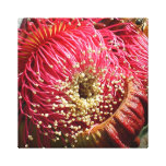Gum Tree Flower Wrapped Canvas Gallery Wrap Canvas