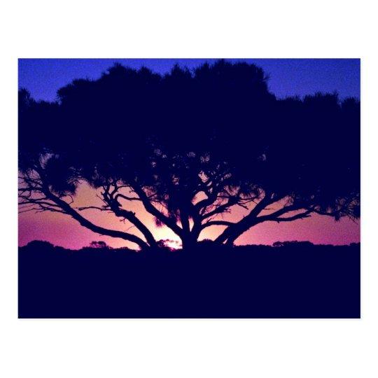 Gum tree, Outback, Australia Postcard