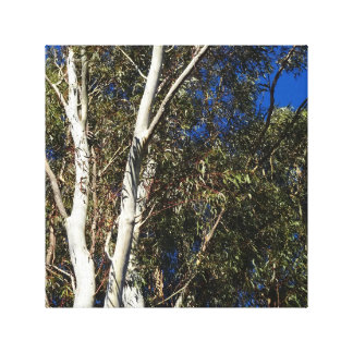 Gum Trees Canvas Print