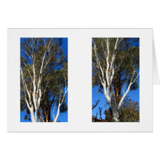 Gum Trees Card