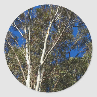 Gum Trees Classic Round Sticker