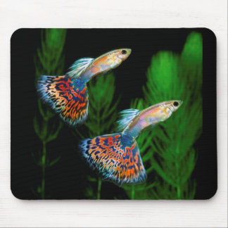 Guppies Mouse Pad