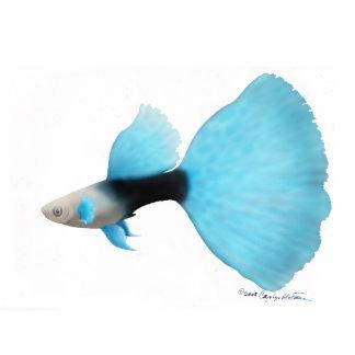 Guppy azul a medias negro de la cola de milano fotoescultura vertical