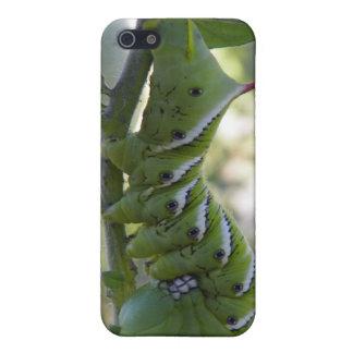 gusano de tomate iPhone 5 cárcasas