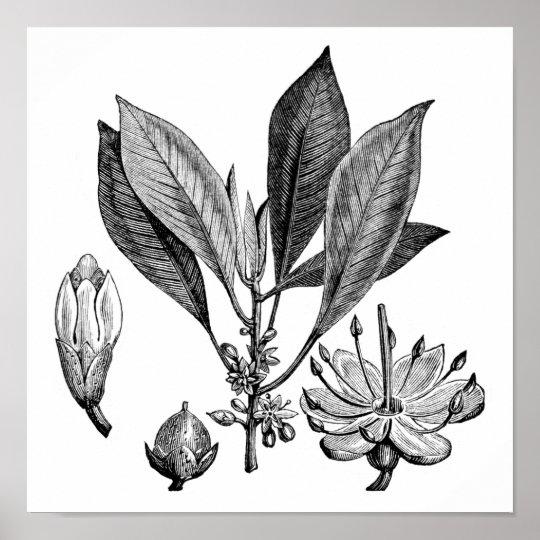 Gutta-Percha Tree Poster