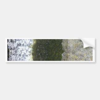 Gutter Trash -- Slime with concrete gutter. Bumper Sticker