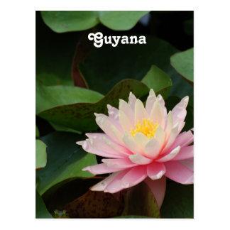 Guyana Water Lily Postcard