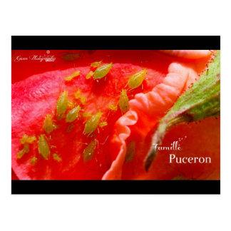 Gwen Photographs - Plant louse Family Postcard
