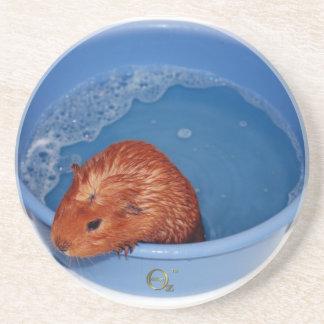 Gwydion - Guinea Pig Sandstone Coaster