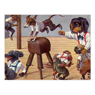 Gym Class for Dogs Postcard