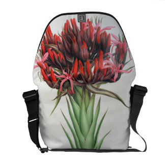 Gymea Lily, 1826 (w/c on paper) Messenger Bag