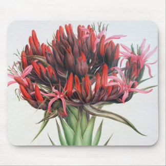 Gymea Lily, 1826 (w/c on paper) Mouse Pad