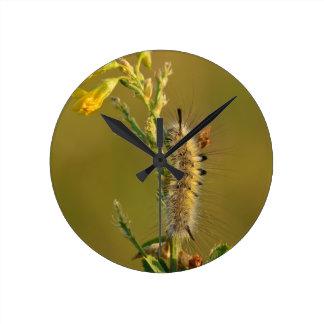 Gynaephora Selenitica Caterpillar Round Clock