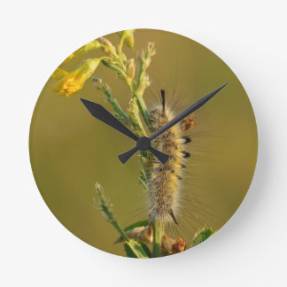 Gynaephora Selenitica Caterpillar Round Wallclock