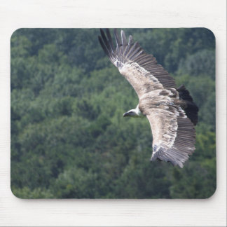 Gyps fulvus flying mouse pad