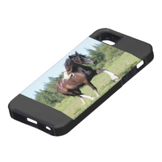 Gypsian Filly iPhone 5 Covers