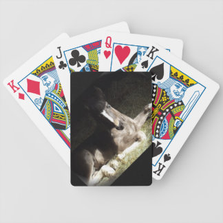 Gypsian Filly Deck Of Cards