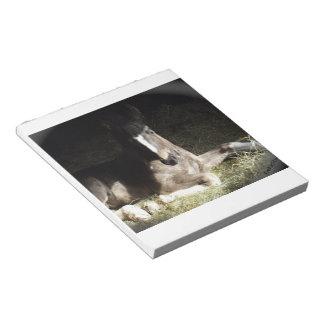 Gypsian Filly Notepad