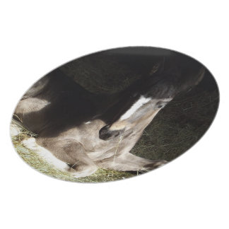 Gypsian Filly Plate