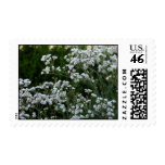 Gypsophilia Postage Stamps