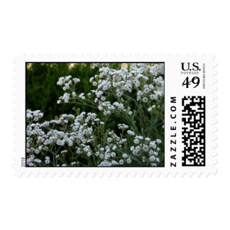 Gypsophilia Postage Stamps