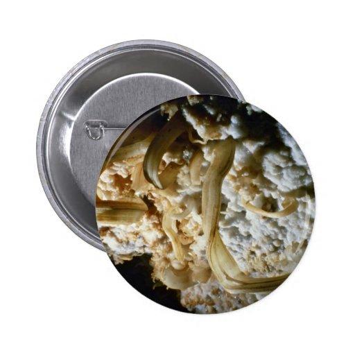 Gypsum flowers flowers 2 inch round button