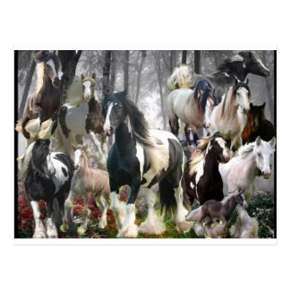 Gypsy Horse Gifts Postcard