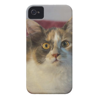 Gypsy iPhone 4 Cover