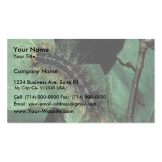 Gypsy Moth Caterpillar Double-Sided Standard Business Cards (Pack Of 100)