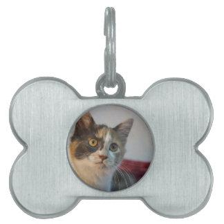 Gypsy Pet ID Tag