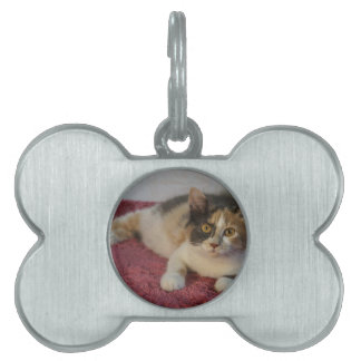 Gypsy Pet Tag