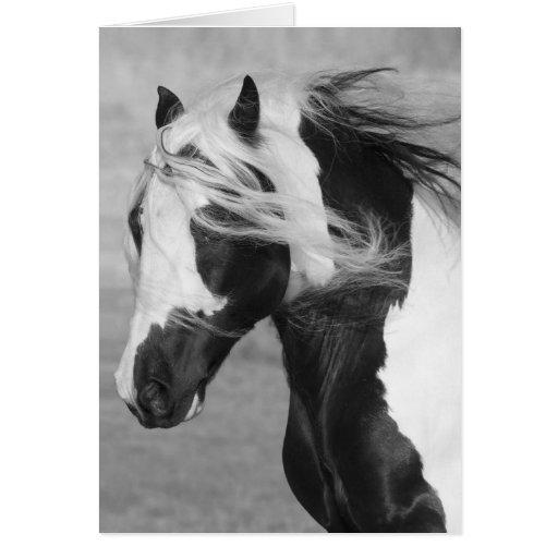 Gypsy Runs Horse Greeting Card
