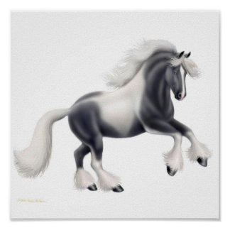 Gypsy Vanner Cob Horse Print