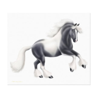 Gypsy Vanner Cob Horse Wrapped Canvas