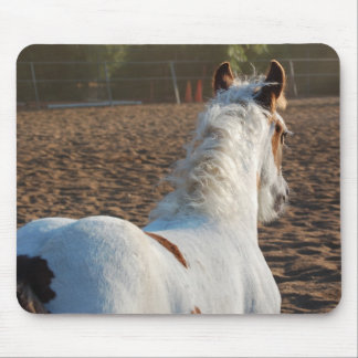 Gypsy Vanner Filly Mouse Pad