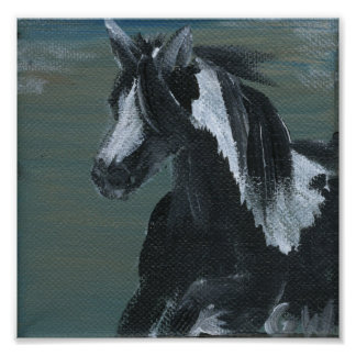 Gypsy Vanner Horse Poster
