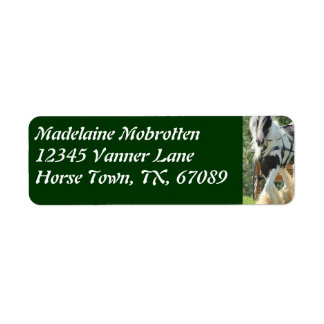 Gypsy Vanner Label