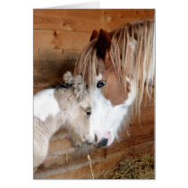 Gypsy Vanner Mare and Foal Mother's Day Card