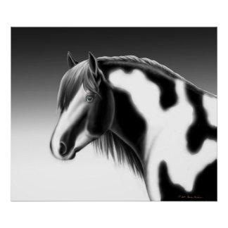 Gypsy Vanner Pinto Draft Horse Poster
