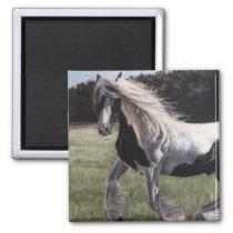 Gypsy vanner pinto horse running in field magnet