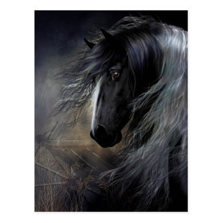 Gypsy Vanner Portrait Postcard