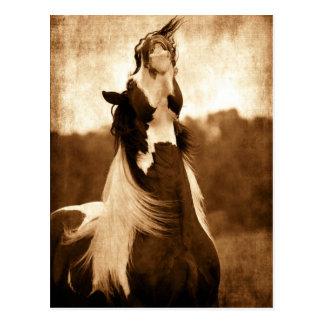 Gypsy Vanner Postcard
