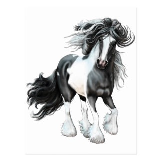 Gypsy Vanner...Prince Postcard